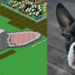 Farmville Boston Terrier portrait by Bryan Chain