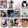 Tag your Facebook friends as LOLcats